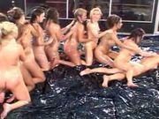 Cdgirls - - Oil Orgy Wrestling