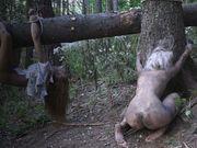 horror el bosque de la muerte